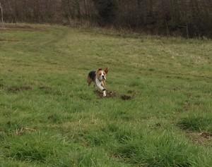 BeagleC